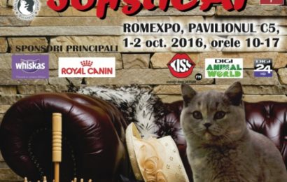 Expoziția Felină Internațională: You can leave your CAT on!