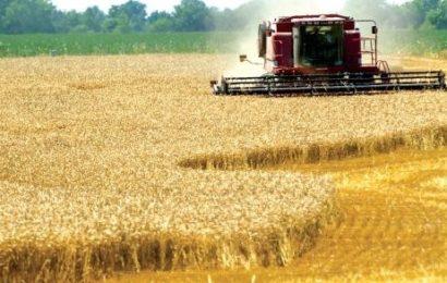 APIA: Avansurile la subvențiile pe 2016 se vor plăti pana pe 1 decembrie