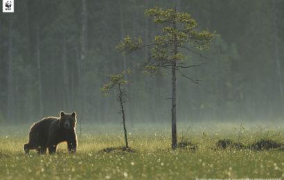 Ariile naturale protejate nu pot rămâne protejate doar pe hârtie