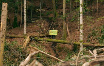 Greenpeace România sesizează autoritățile despre tăierile ilegale care încă au loc în pădurile virgine din Argeș