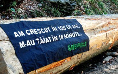 Greenpeace: Ministerul Mediului alocă 2,6 milioane lei pentru pădurile virgine