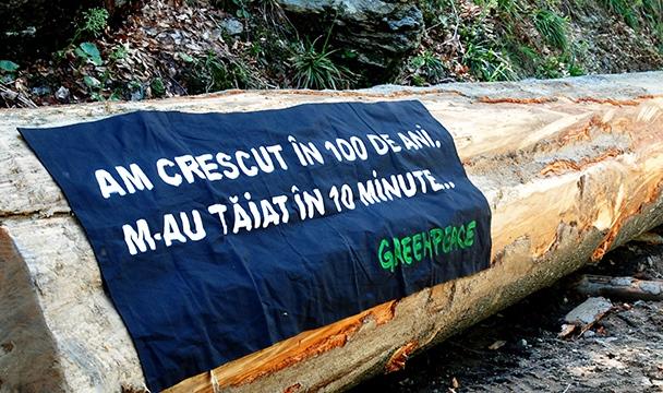paduri_copac-greenpeace