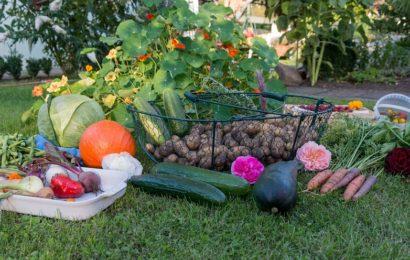 Buget mărit pentru promovarea produselor agricole