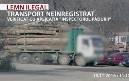 Greenpeace: Peste 1.000 de metri cubi de lemn confiscați în Gorj