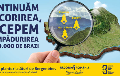 Bergenbier va planta 50.000 de brazi in Transilvania