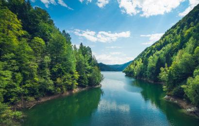 Greenpeace România lansează aplicația prin care poți salva pădurile de tăieri ilegale