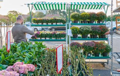 Kaufland România deschide primul târg de plante de sezon
